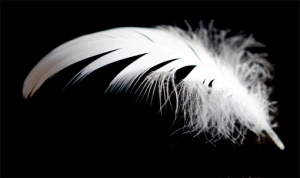 white-feather2